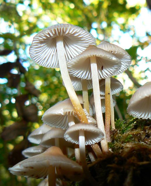 Fungi on a tree stump, Stanton Park, Swindon