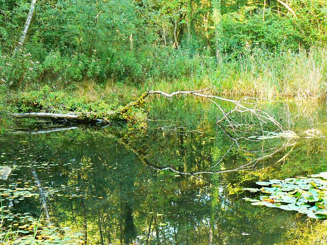 Lake, Stanton Park, Swindon