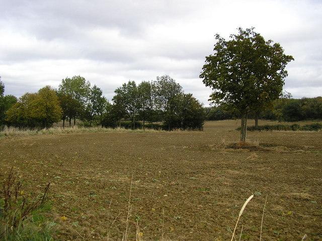 Farmer's Field off  Stocken Hall Rd., Stretton