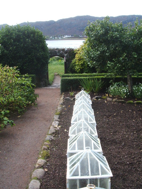 Victorian cloches in walled garden