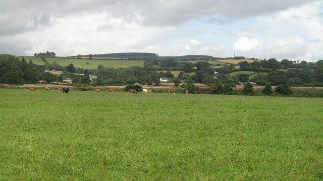 Cattle, Felhampton