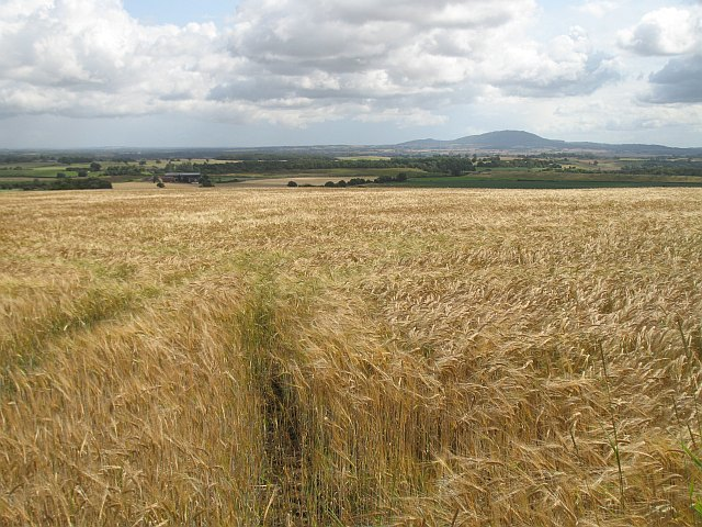Barley, Lyth Hill