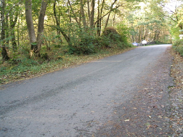 The road through Philipson's Wood