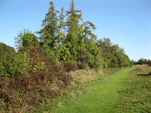 Grassy path on Mickleham Downs