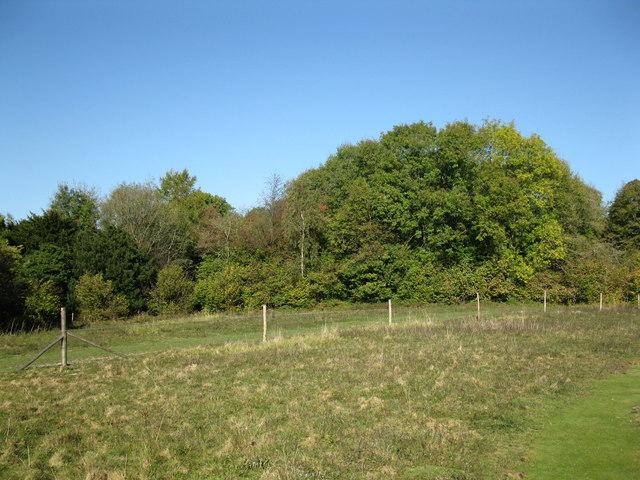 The edge of Cherkley Wood
