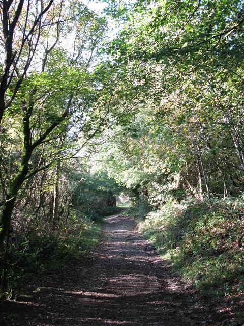 Bridleway on Headley Heath