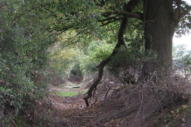 Track west of Hampton Lodge