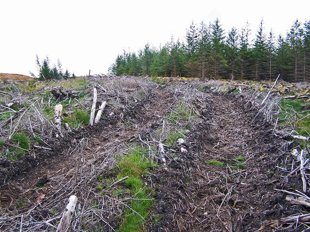 Slash track in Glen Varragill forest