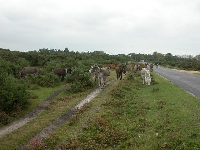 Setthorns, donkeys
