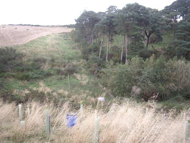 Woodland edge, Shield Burn