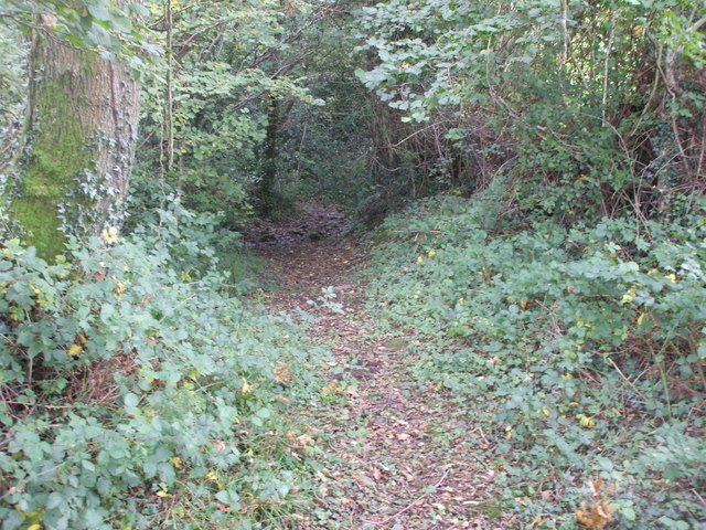 The footpath briefly goes through woodland