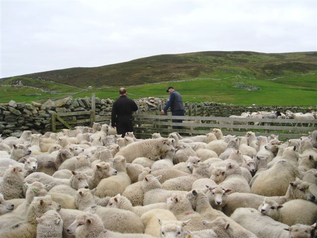 Shedding the lambs