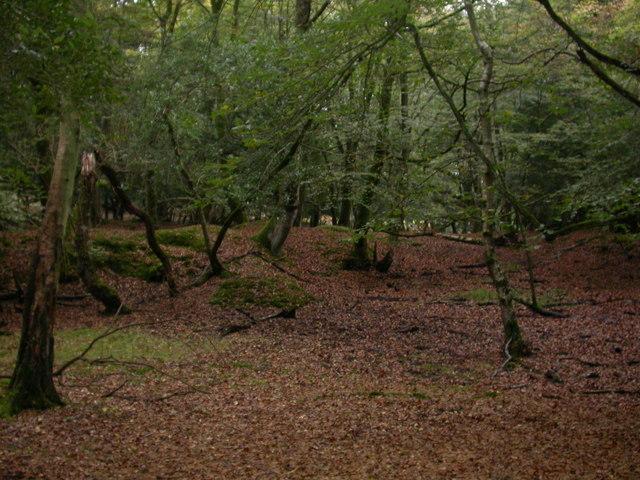 Hincheslea Wood, hollows