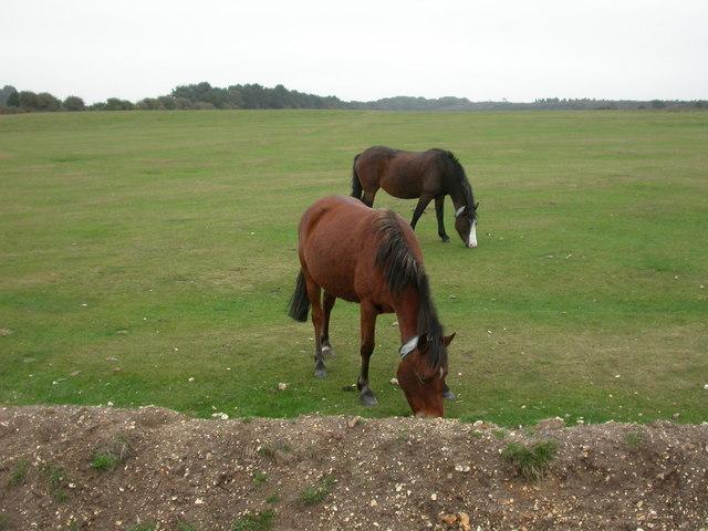 Long Slade Bottom, ponies
