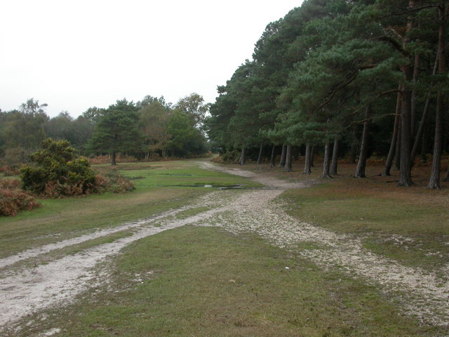 Hincheslea, woodland boundary
