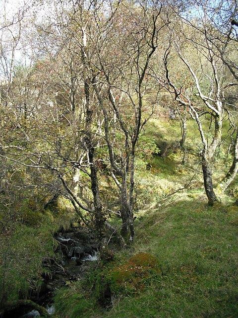 Birch woods, Inverchapel