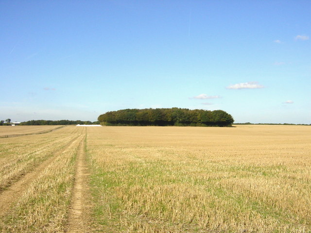 Birch Wood above Lenham