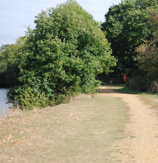 Trees by the riverside, Haysden Country Park