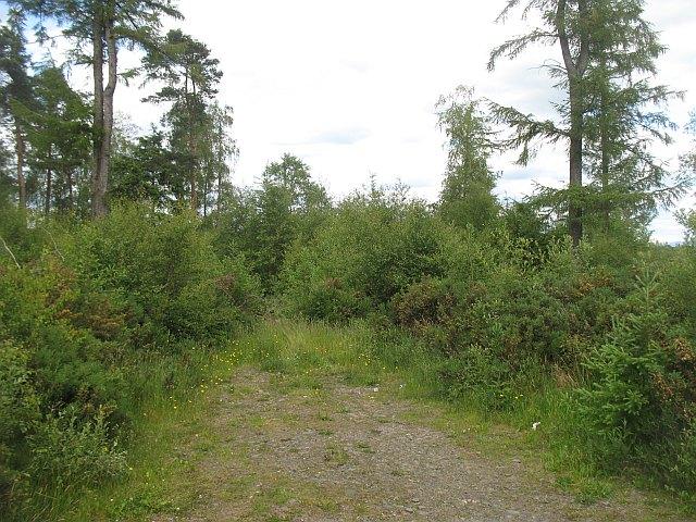 Ward Toll Wood