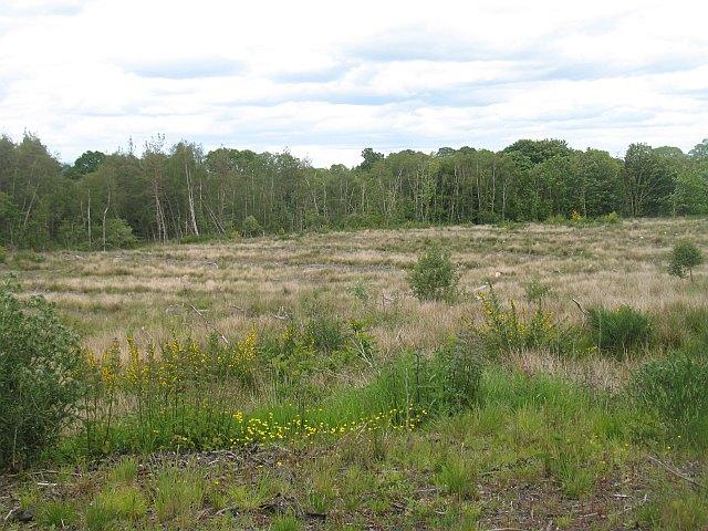 Garchell Wood
