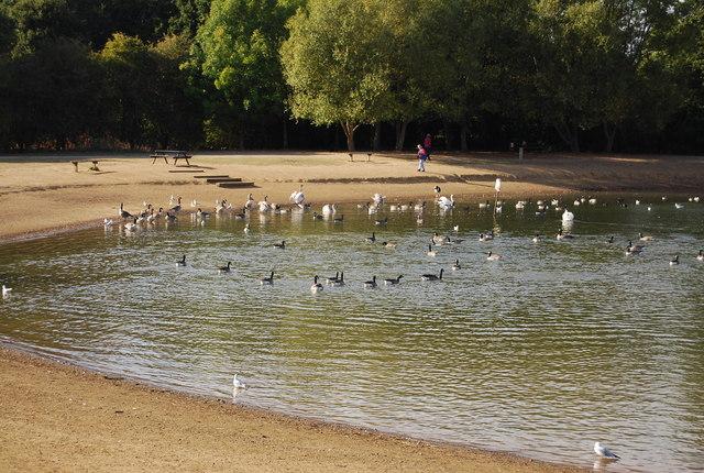 Geese & Ducks on Barden Lake