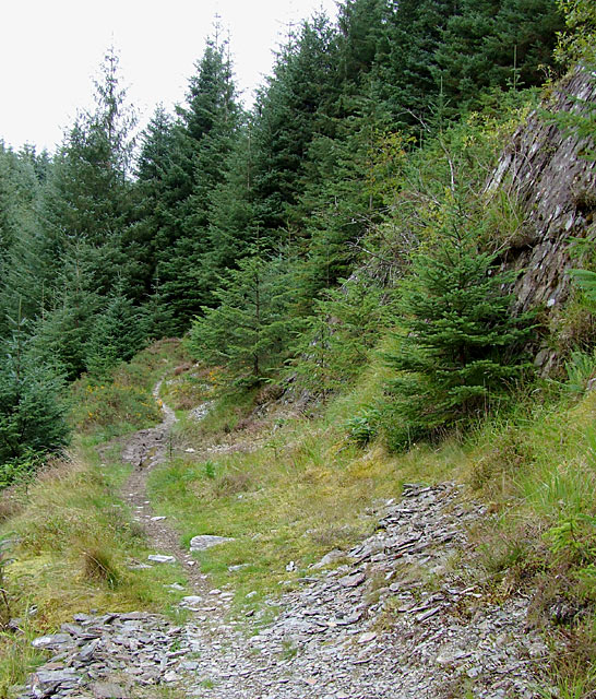 Bridleway into the Tywi Forest, Powys