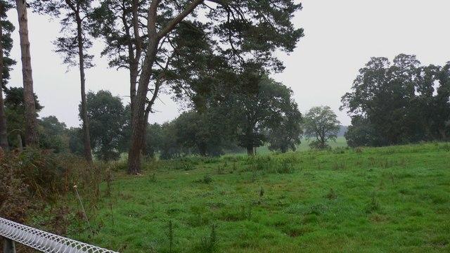 Field by Blackmoor Road