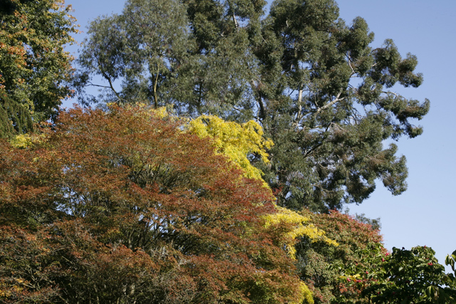 Tree Tops, Batsford Arboretum