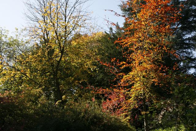 More Autumn Colours, Batsford Arboretum