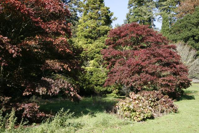 Autumn Reds, Batsford Arboretum
