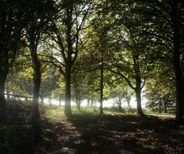 2009 : Group of trees near Hill Barn
