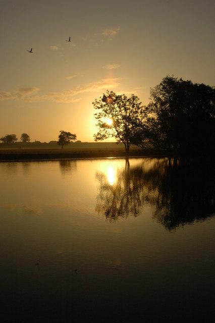 Cormorants in the sunrise