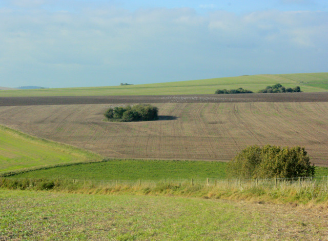 2009 : Copse on a ploughed hillside
