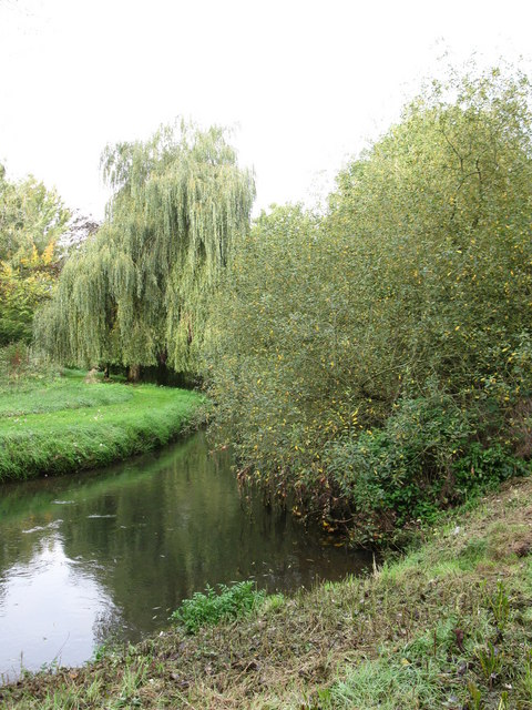 Willows by the River Blackwater