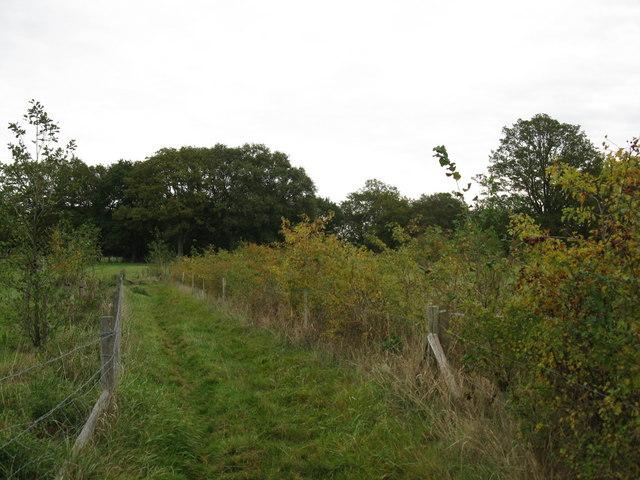 Three Castles Path near Moulsham Green