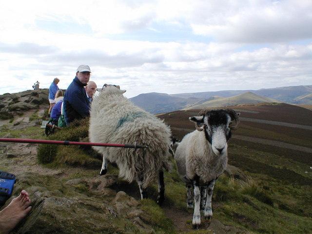 If the sheep of Win Hill want your sandwich, they'll take it!