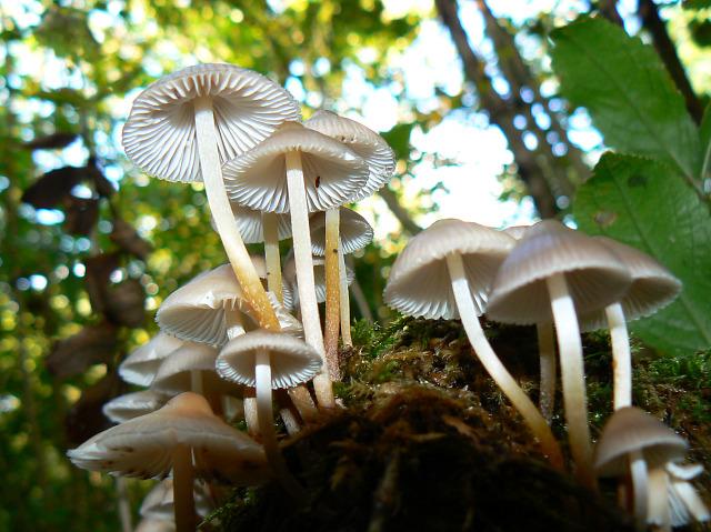 Small fungi on a tree stump, Stanton Park, Swindon