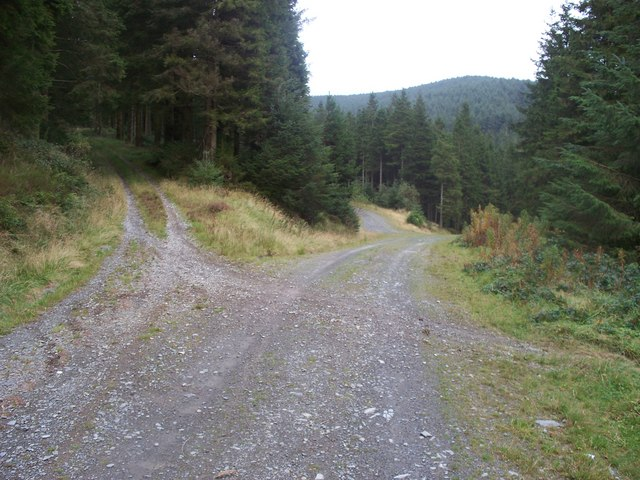 Junction of tracks in Myherin Forest