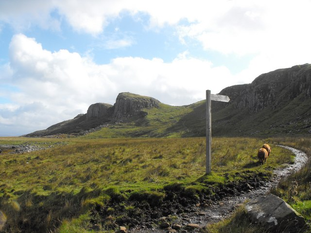 Pigs at Staffin