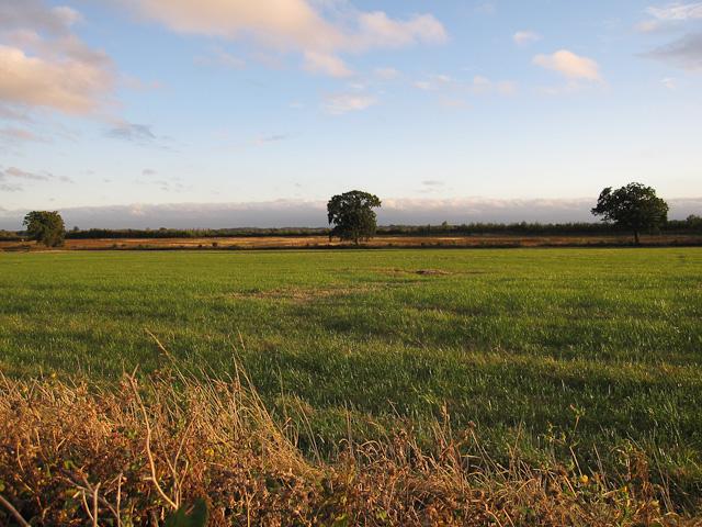 Fields in West Cambridge site area