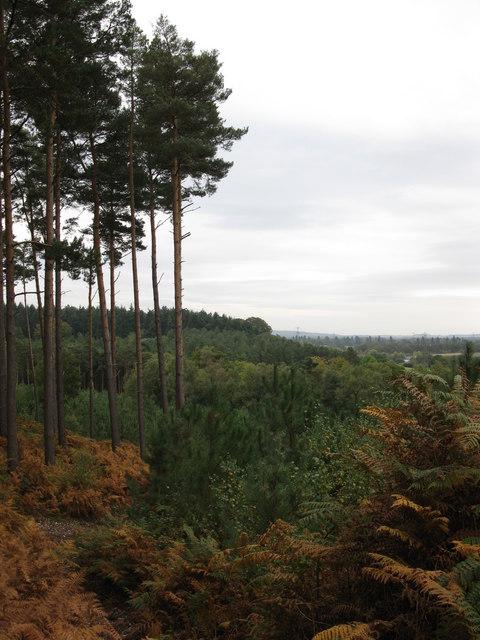 Autumn view from Warren Heath