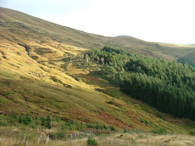 Forest edge in Glen Shiel