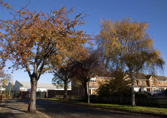 Autumn colours in Poplar Road, Ashford