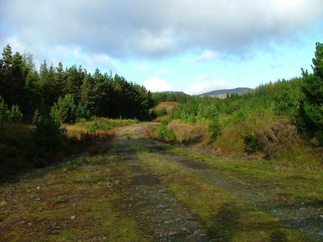 Track into Bunloinn forest