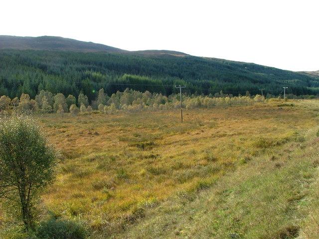 Birch and Beinneun Forest