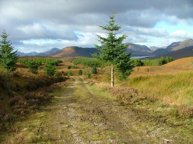 Track in Bunloinn forest