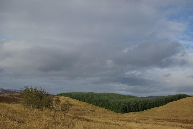 Moorland/forest boundary NE of Torran Turach
