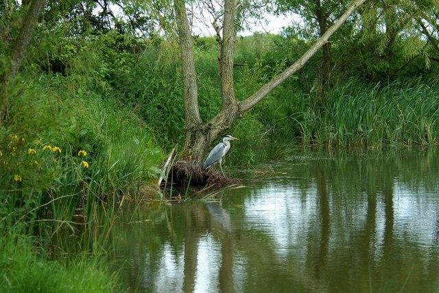 Pond at Anderton