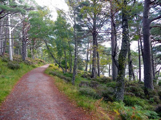 Path on the north shore of Loch an Eilein