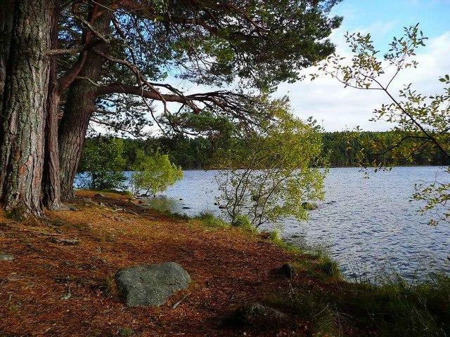 Trees by Loch an Eilein